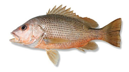 ماهی سرخو