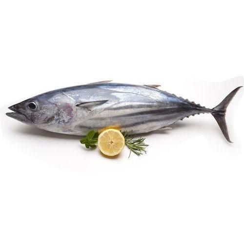ماهی هوور یا ماهی تن