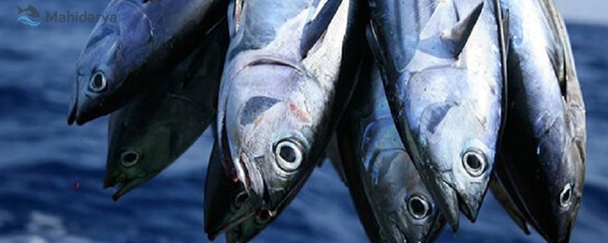ماهی و افسردگی